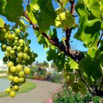 White Grapes Grapes Winegrowing Fruits Vine Wine